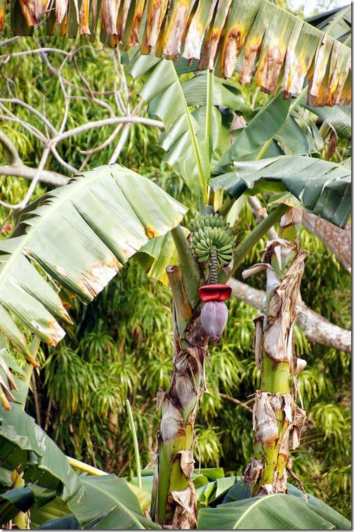 Fairchild Tropical Botanical Gardens - Miami (26)