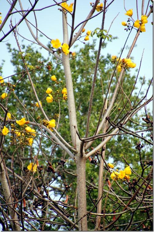 Fairchild Tropical Botanical Gardens - Miami (29)