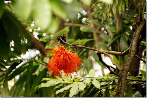 Fairchild Tropical Botanical Gardens - Miami (39)
