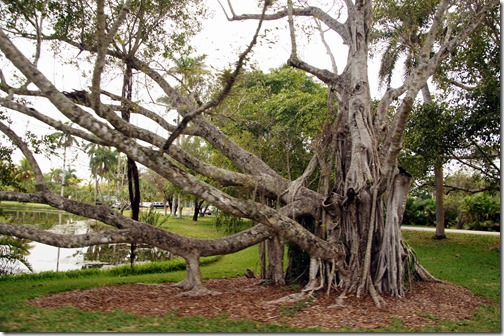 Fairchild Tropical Botanical Gardens - Miami (90)