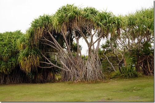 Fairchild Tropical Botanical Gardens - Miami (91)