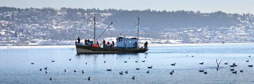 Det drives mye fritidsfiske utenfor Drøbak. Måkene venter (forgjeves?) på at Ski Havfiskeklubb omsider skal sløye fangsten.