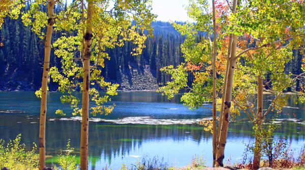 Fall Winter Wallpaper Free Exploring Grand Mesa National Forest Visit Grand