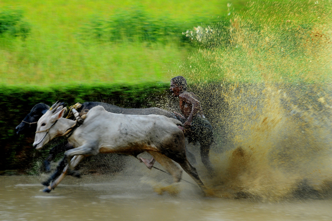 Bull-Race