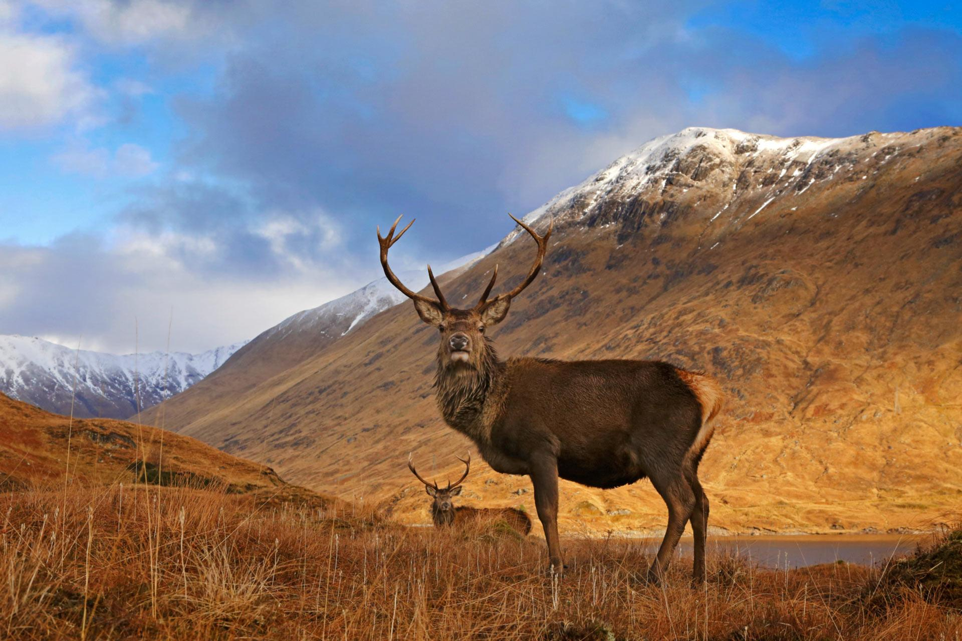 National Geographic Fall Wallpaper Cairngorms National Park Visitscotland
