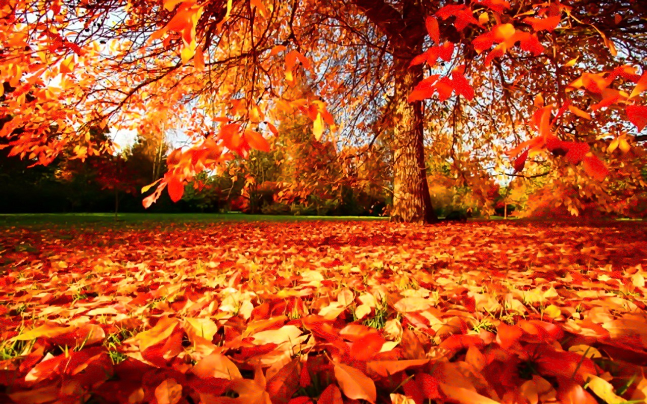 Fall Sunshine Wallpaper Awesome Autumn Activities Visits Unlimited