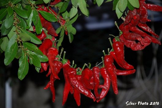 peperoni-dolci-di-altino