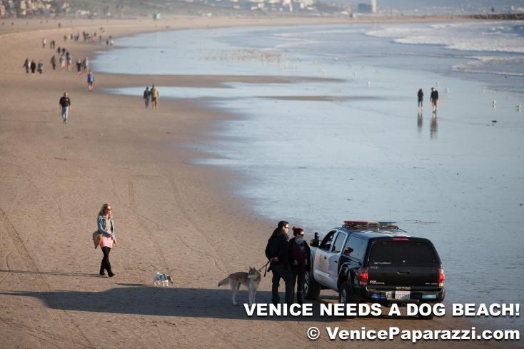 Dogs in Venice