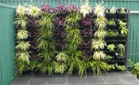 Vertical Gardens Adelaide: Feature Walls For Small Gardens.