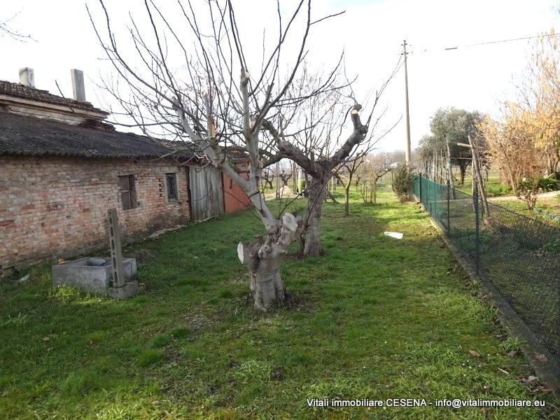 2386-vendita-cesena-terredelmoro-rudere_-004