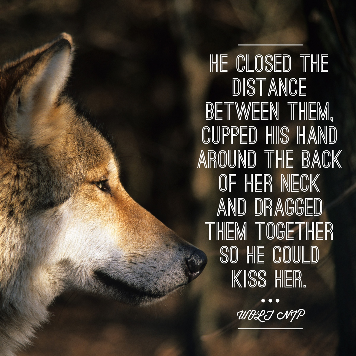 Deep Quotes About Life Wallpaper Alpha Wolf Quotes Quotesgram