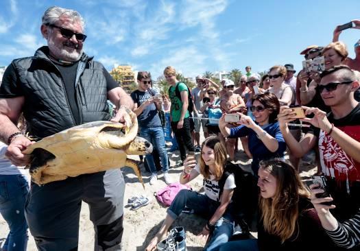 tortuga-vuelve-al-mar-benidorm