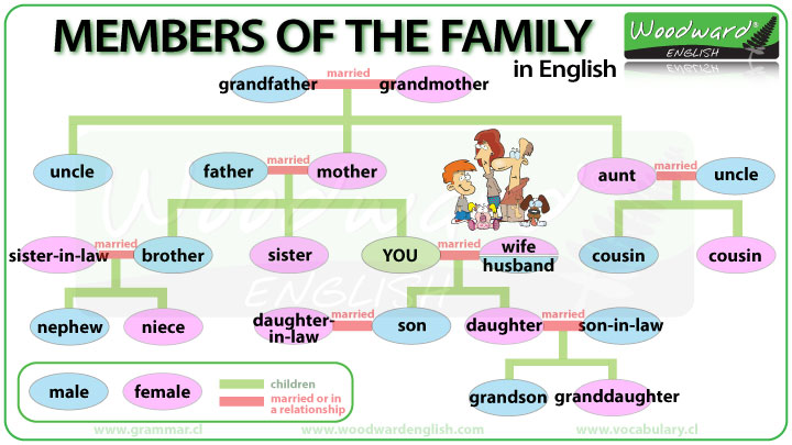 Family members - English Vocabulary - family relation tree