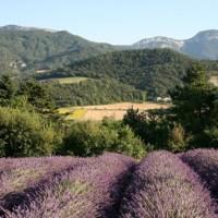 Itinerari lavanda (3° puntata): nella valle della Drôme
