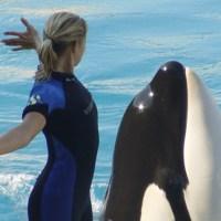 Antibes: incontri ravvicinati con orche, squali e delfini!