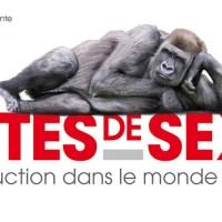 """Parigi: """"sesso bestiale""""!"""