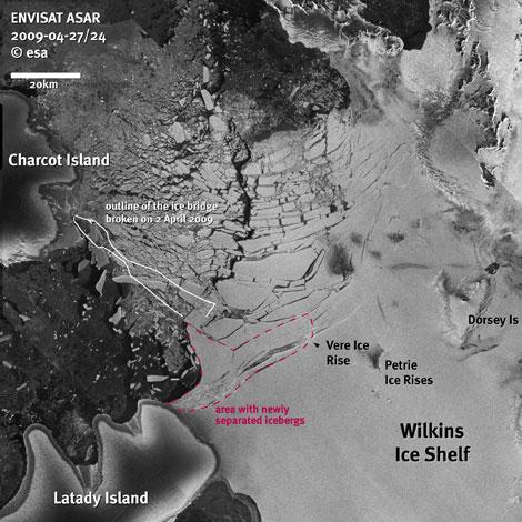 La plataforma Wilkins ha perdido 700 kilómetros cuadrados de hielo