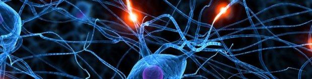 Redes e inteligencia