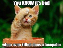 kitteh facepalm