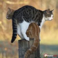 balancing cats