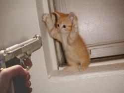 crime pays kitteh