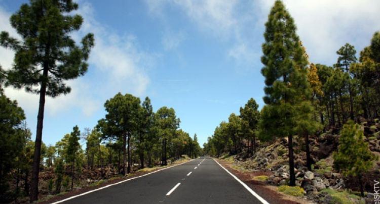 Tenerife-corona-forestal