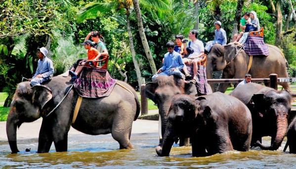 Turismo de exploração animal