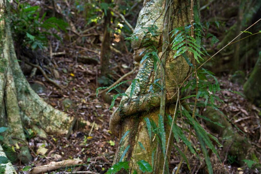 dorrigo-rainforest-1