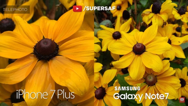 iphone-7-plus-vs-galaxy-note-7-sample-3-zoom