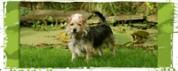 Can Dogs Be Trained To Sniff Out Bed Bugs? - Wag The Dog UK