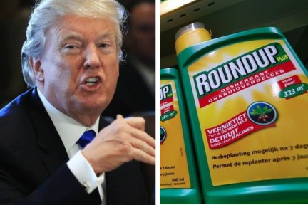 The Trump Administration Wants to Reverse Round-Up Verdict, Protecting Bayer and Monsanto