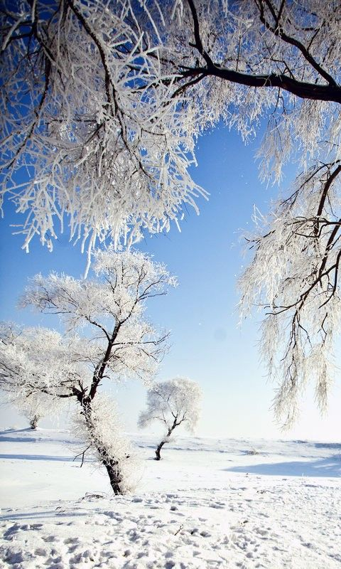 Snow Falling Wallpaper Download 480x800 Mobile Phone Wallpapers Download 14 480x800