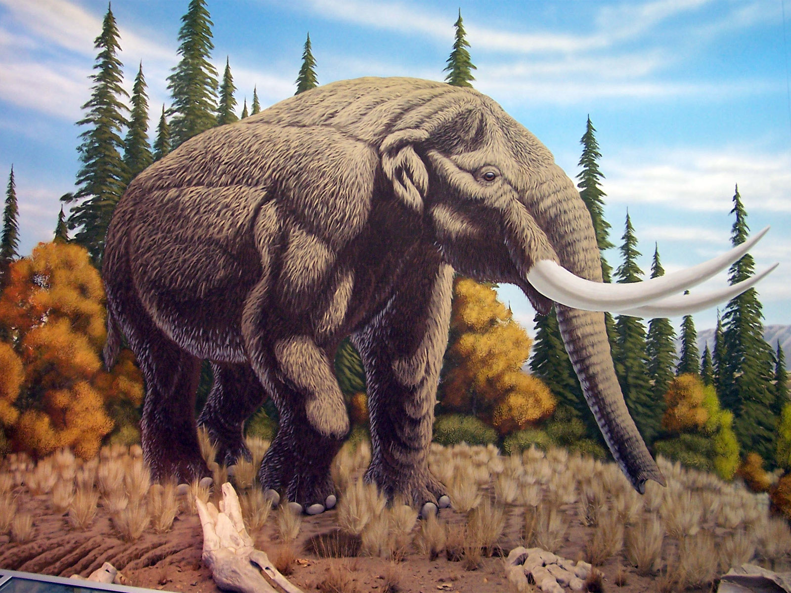 High Definition Animal Wallpapers Mastodon Wallpaper Free Hd Backgrounds Images Pictures