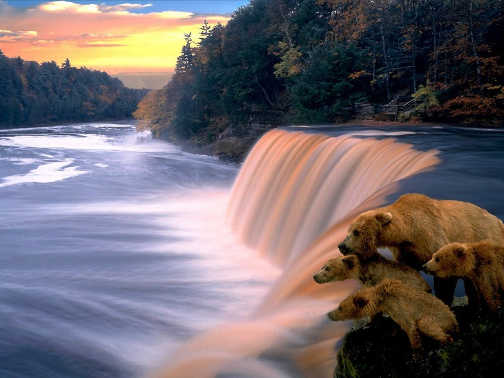 Fall Wallpapers For A Cell Phone Peaceful Water Fall Wallpaper Free Hd Backgrounds Images