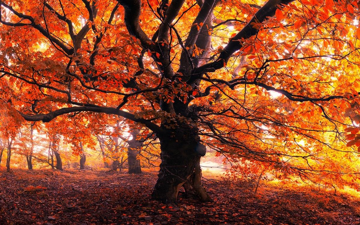 Whimsical Fall Desktop Wallpaper Landscape Nature Trees Forest Leaves Mist Morning