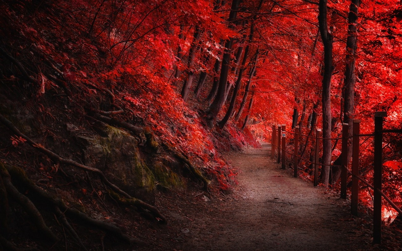 Cute Wallpapers For Girls In The Fall Landscape Nature Fall Red Path Fence Forest Trees