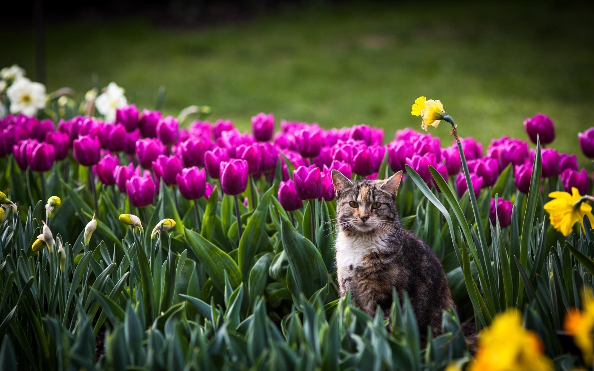 Cute Cat Wallpaper 3d Cat In The Flowers Field Tulip Bokeh Wallpaper Animals