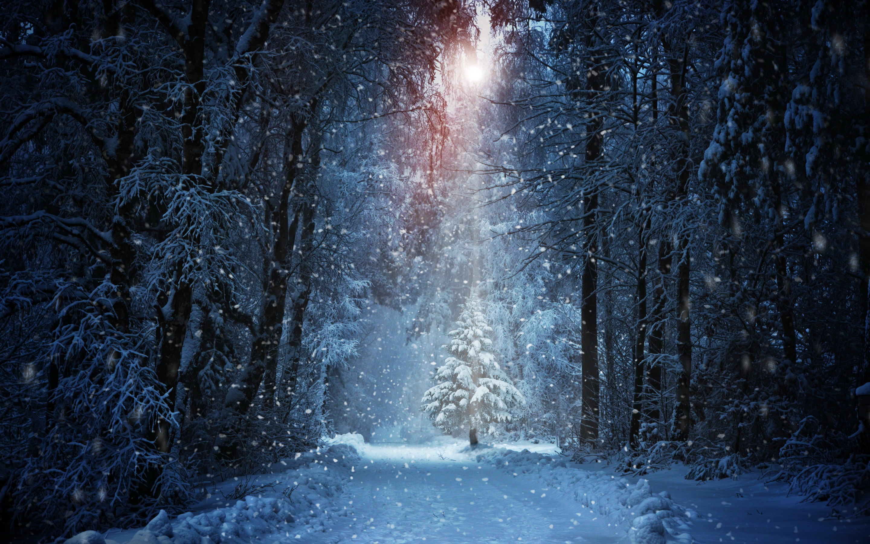Custom Wallpaper 3d Winter Forest Light Rays Wallpaper Nature And Landscape