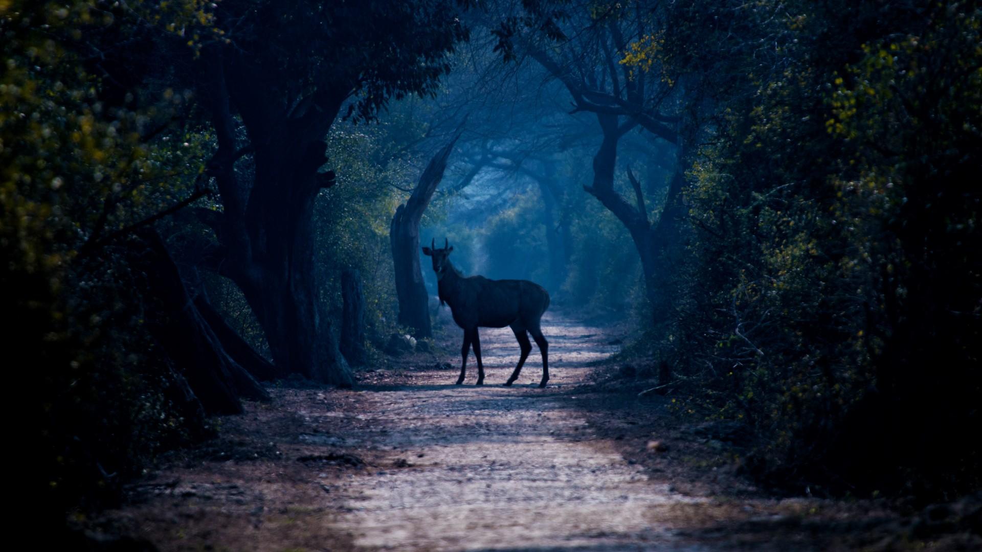 Good Night Hd Wallpaper 3d Love Forest Fog Deer Road Trees Animals Wallpaper