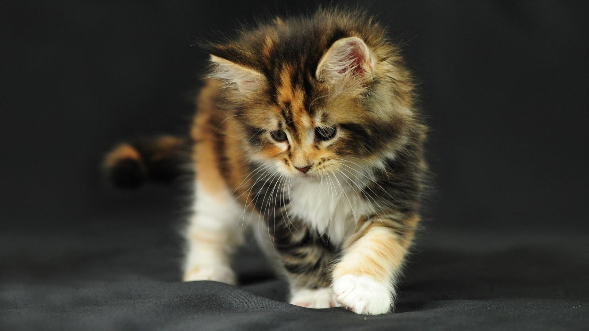 3d Cute Cat Wallpaper Looking For Trouble Wallpaper Animals Wallpaper Better