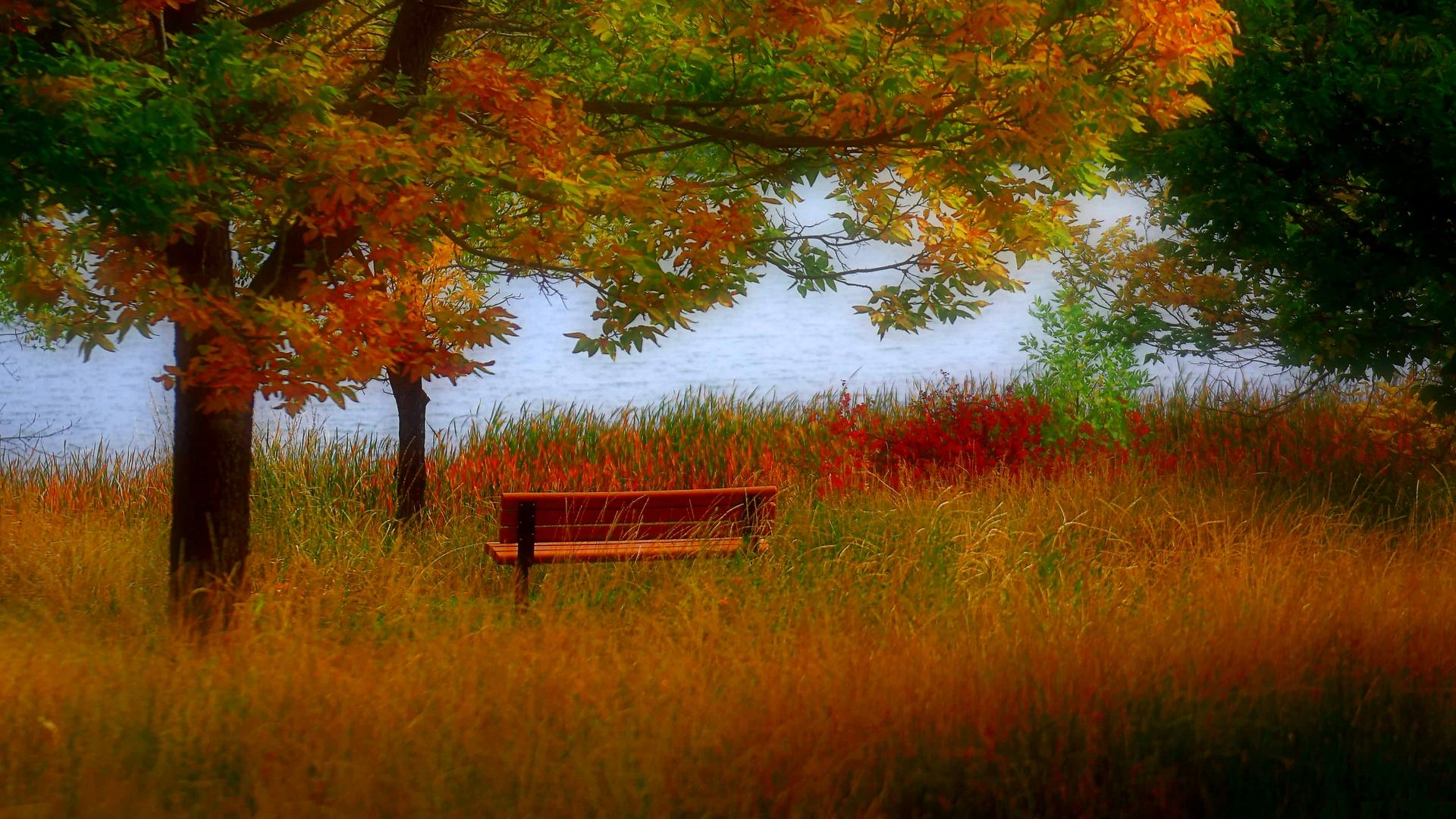Fall Leaf Wallpaper For Mobile Autumn Bench Wallpaper Nature And Landscape Wallpaper