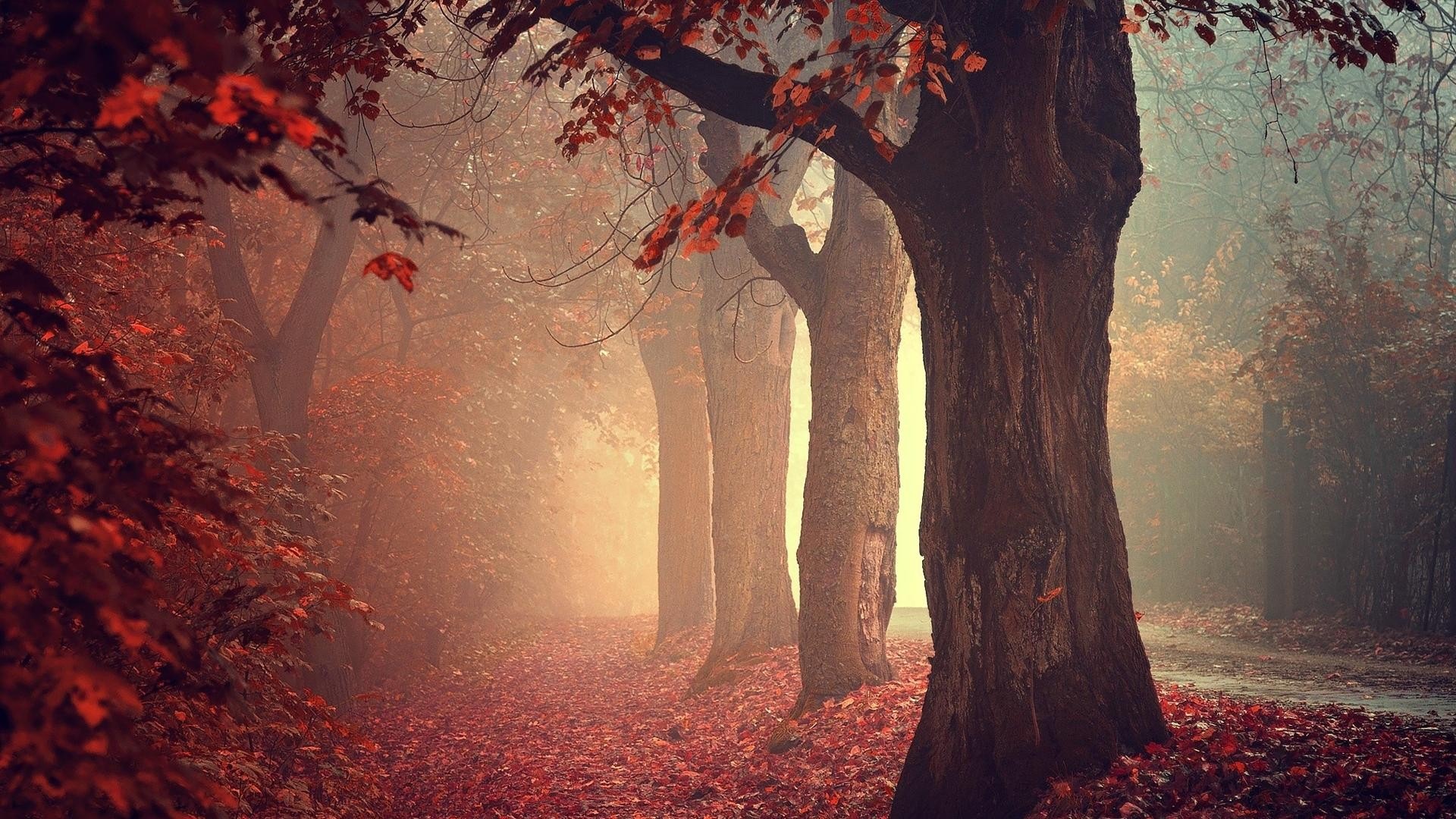 4k Laptop Wallpaper Fall Forest Fall Mist Trees Nature Leaves Forest Wallpaper
