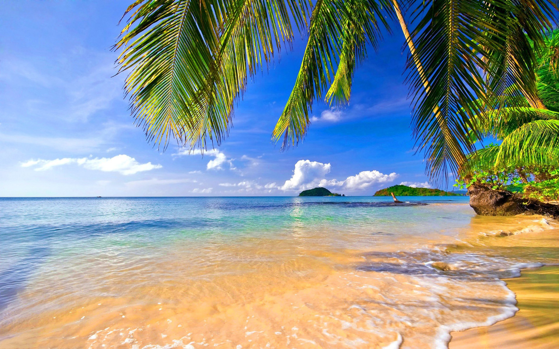 Cute Palm Tree Wallpaper Sea Palm Trees Wallpaper Nature And Landscape