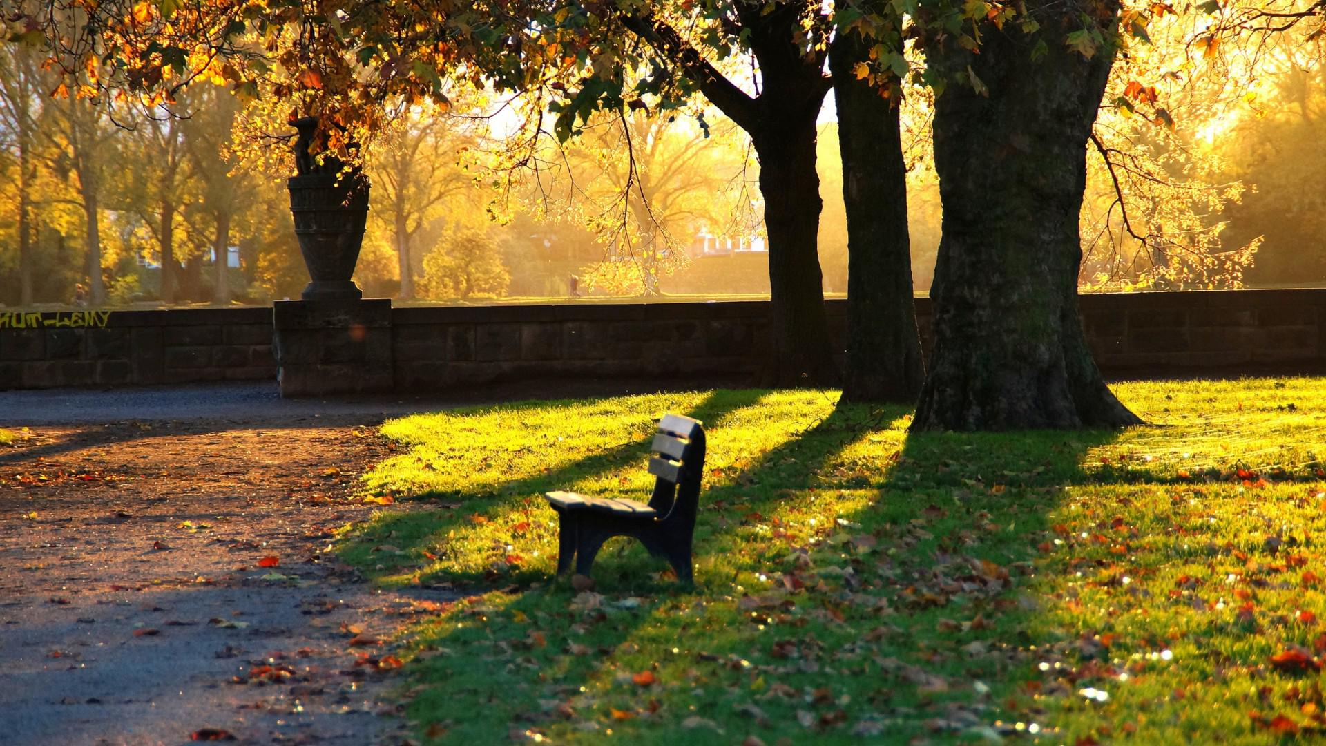 4k Central Park In The Fall Wallpaper Park Benches Grass Leaves Fall Evening Quiet Scenery