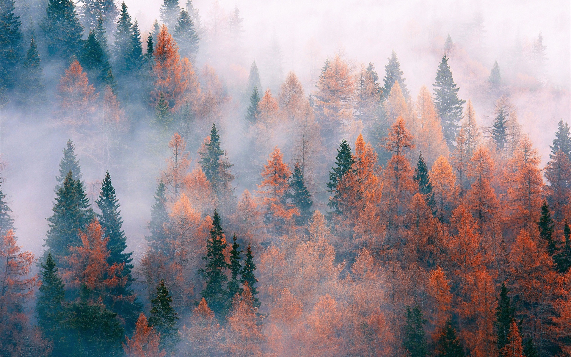 Fall Leaf Wallpaper For Mobile Forest Trees Fog Autumn Wallpaper Nature And
