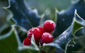 Frosty Fall Leaves Wallpaper Berries Fall Ice Wallpaper Nature And Landscape