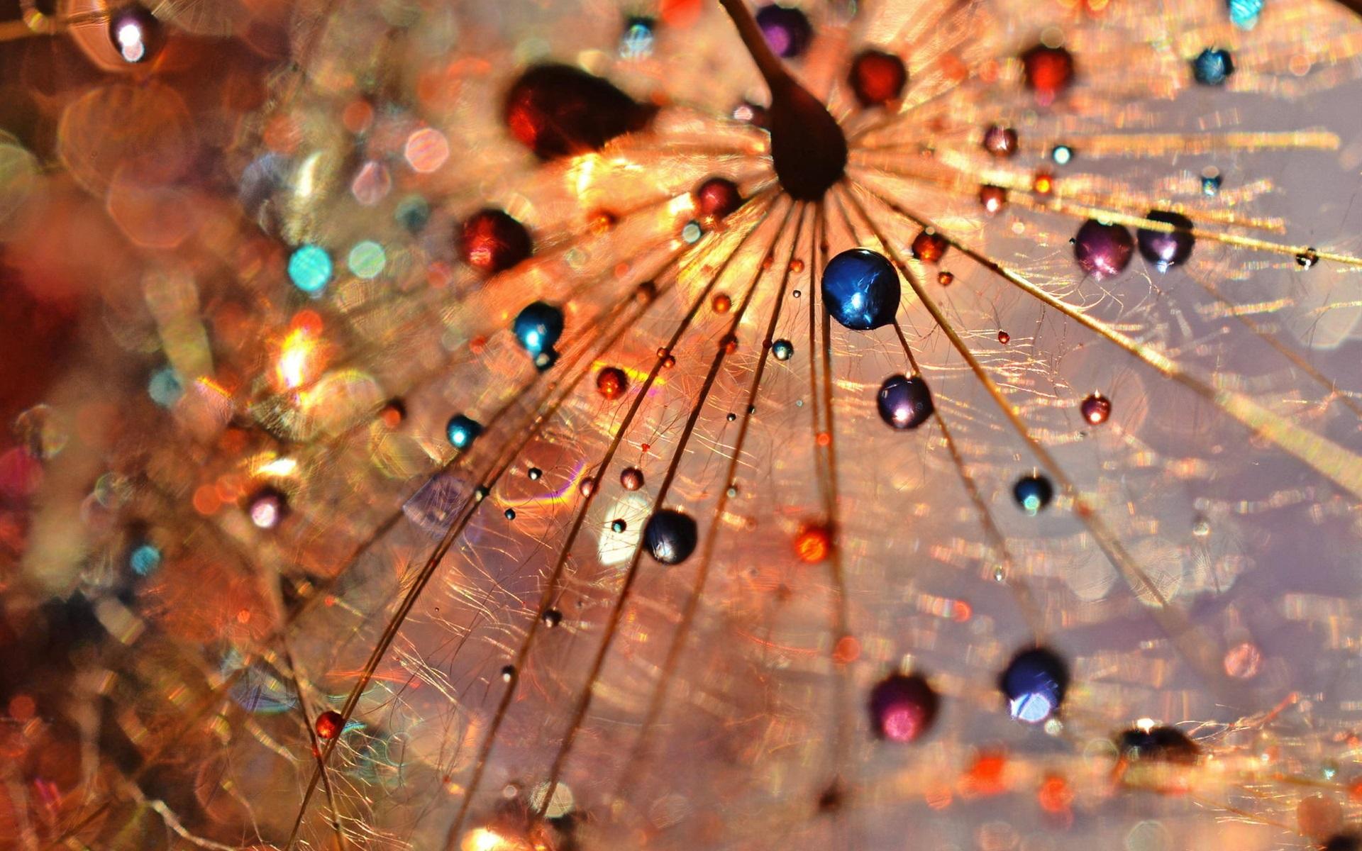 3d Crystal Wallpaper Dandelion Macro Photography Dew Drops Colorful Wallpaper