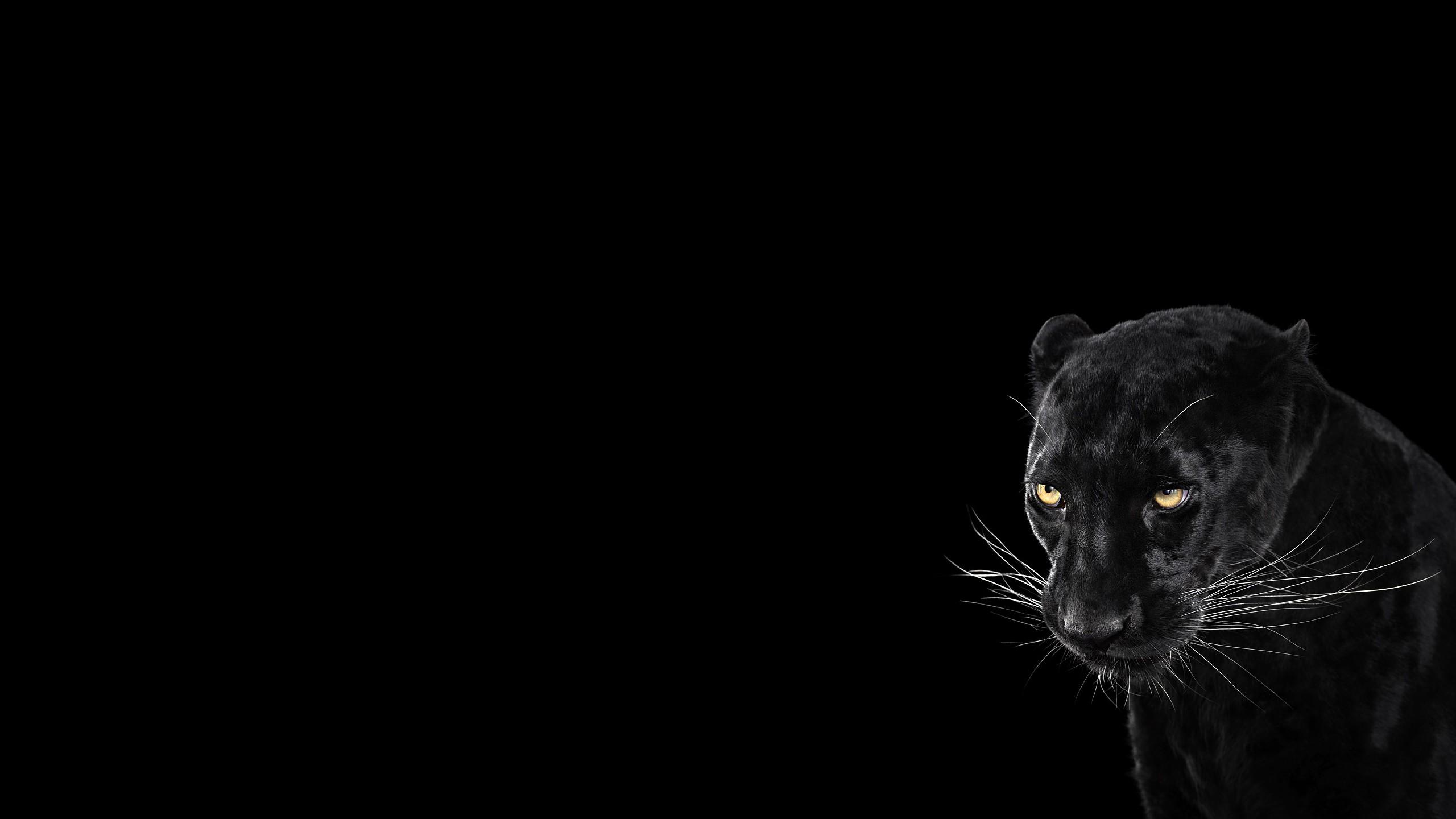 James Bond Iphone Wallpaper Panther Black Background Cool Animal Wallpaper