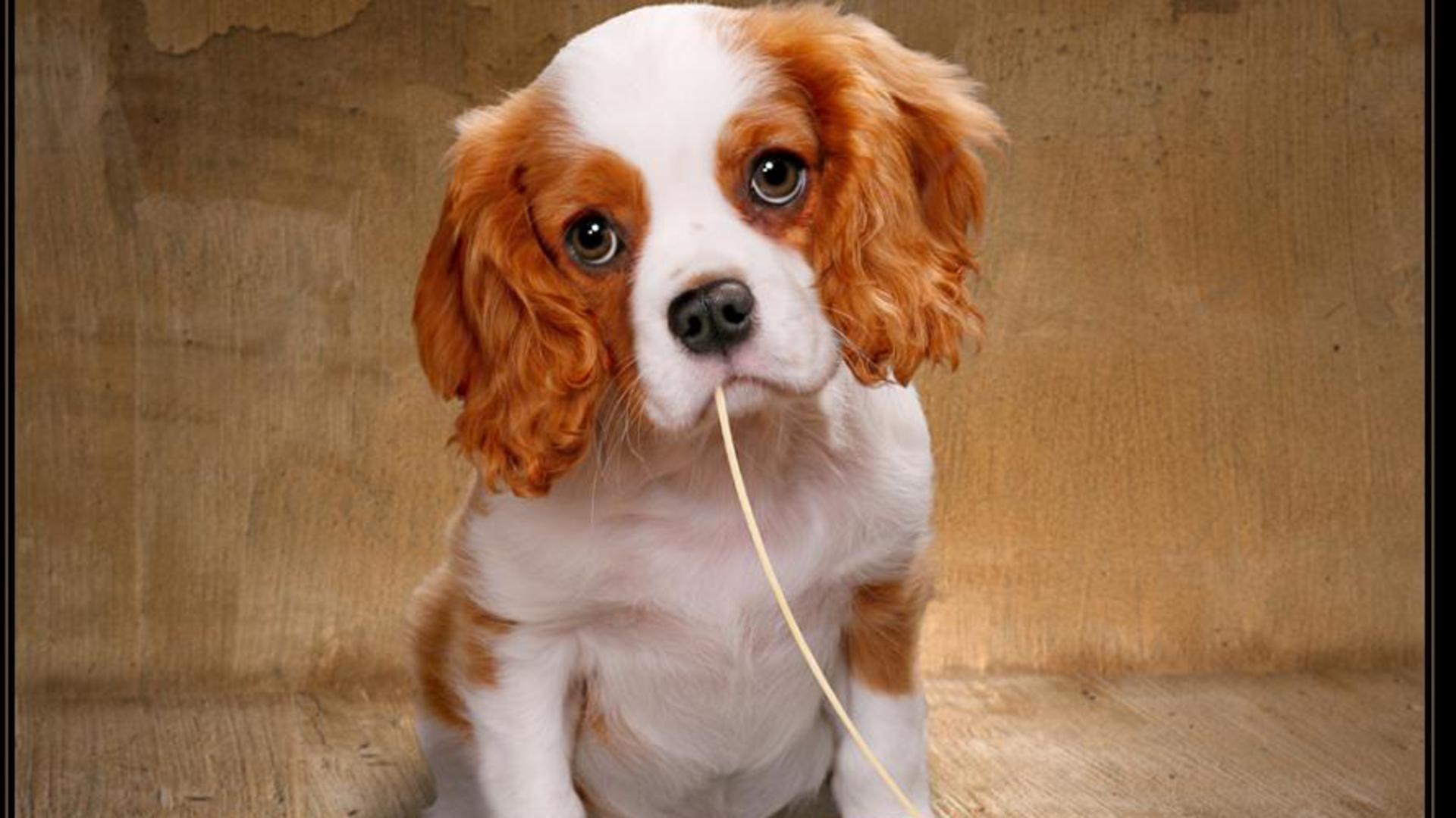 Cute Puppies Wallpaper 1080p Puppy Dog Eyes Wallpaper Animals Wallpaper Better