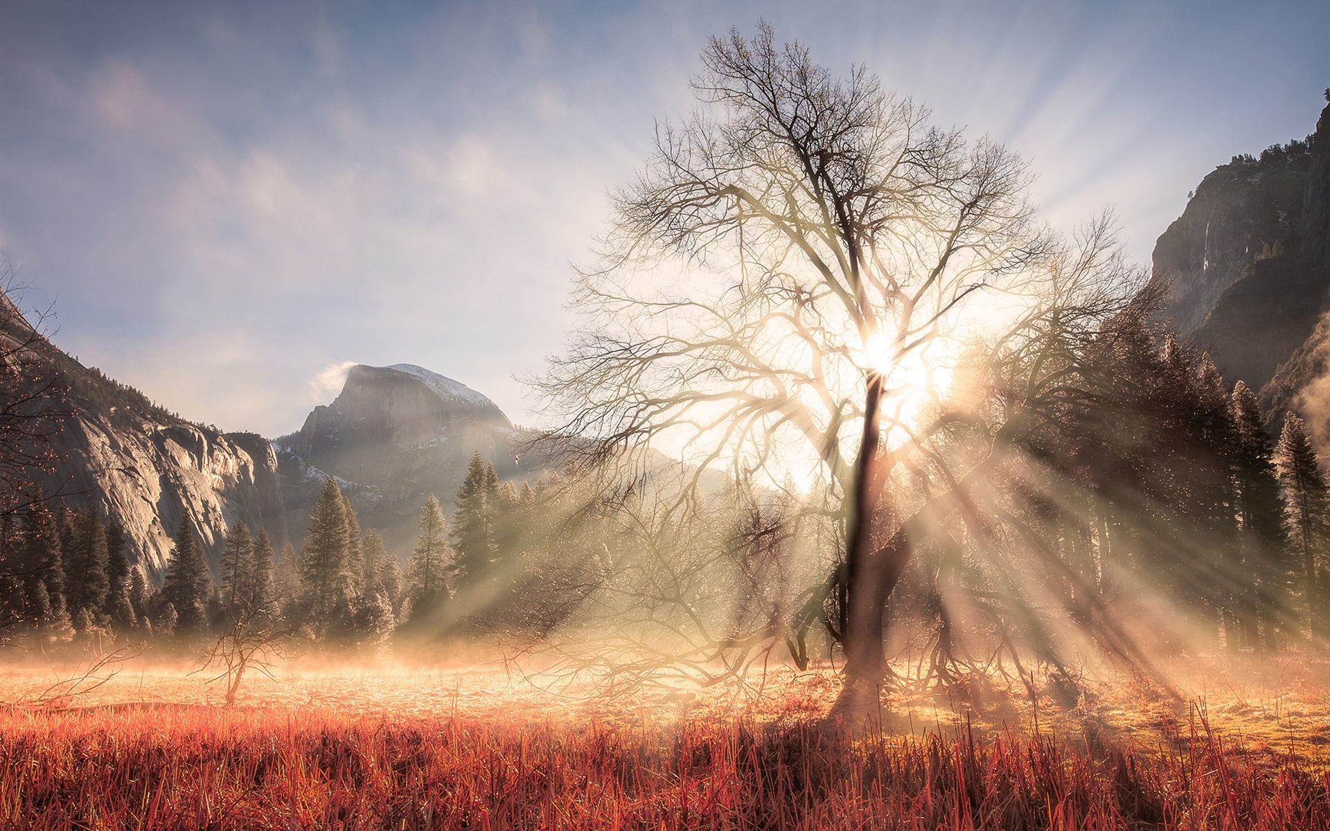 Cute November Calendar Wallpaper Usa California Yosemite National Park Winter Tree Sun